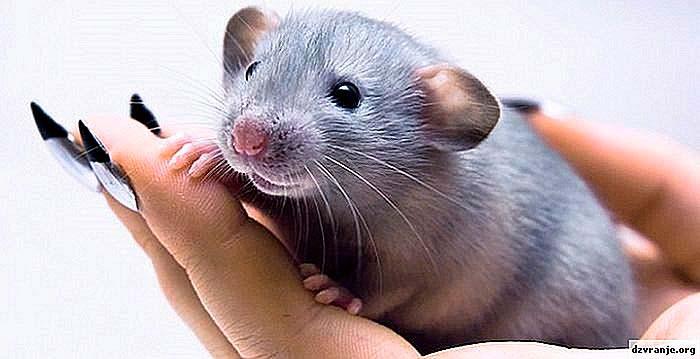 Металическая крыса
