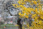 апрель в беларуси
