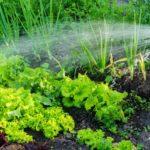 Календарь садовода для Беларуси на июнь 2020 года