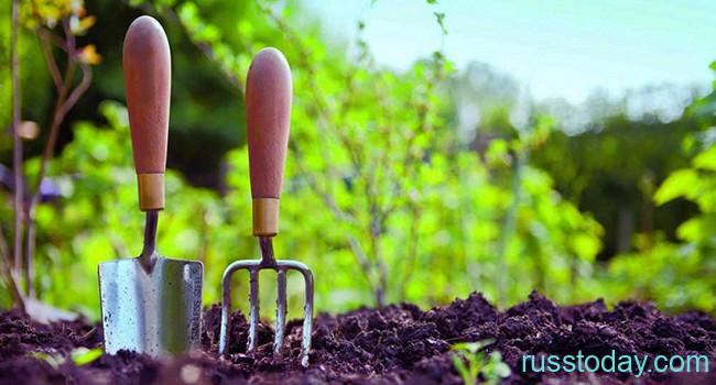 Садовые работы в 2020 году