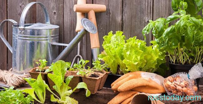 Календарь садовода для Беларуси на июль 2020