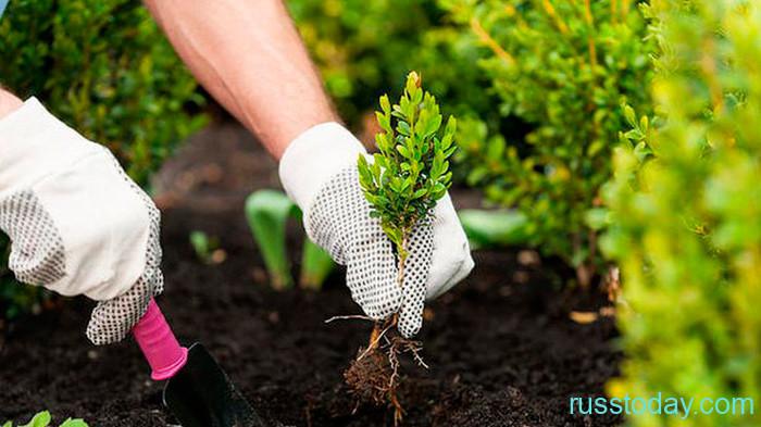 Календарь садовода и огородника для Беларуси на октябрь 2021 года