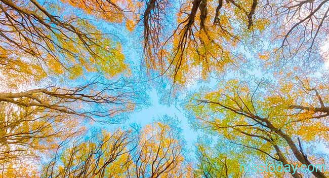 Погода в Воронеже на осень
