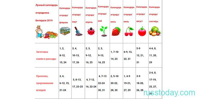 Календарь огородника и садовода на ноябрь
