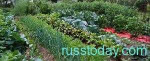 Календарь огородника и садовода для Беларуси на ноябрь 2021 года