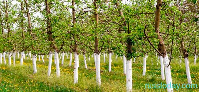 Календарь огородника и садовода для Беларуси